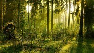 Региональный этап Всероссийского юниорского лесного конкурса «Подрост»