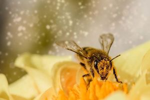20 мая - «Всемирный день пчел»